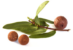 sandalwood nut oil used in boolamarr sanitary products